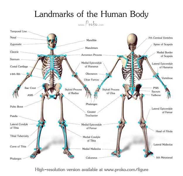 Punti di riferimento del corpo umano_anatomia