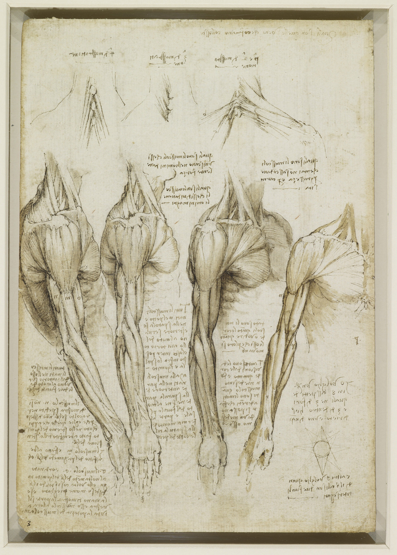 Fantastisch Anatomie Des Menschen Da Vinci Zeitgenössisch - Anatomie ...
