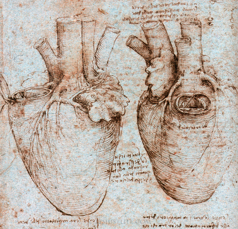 Leonardo da Vinci Anatomy References il cuore | 3DArt