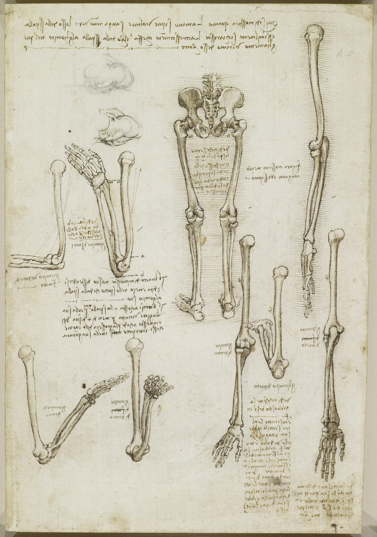 Recto: The bones of the arm and leg. Verso: The surface anatomy | 3DArt