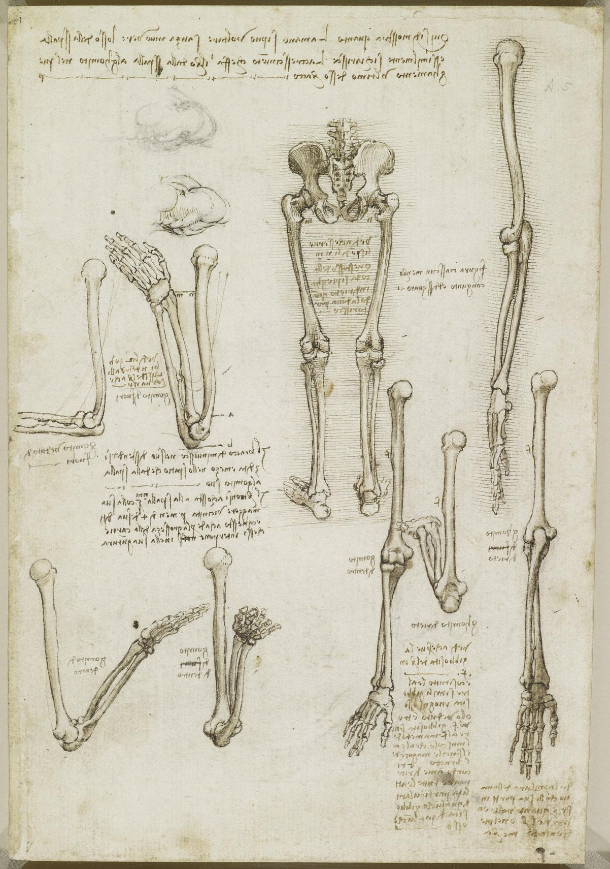 Gemütlich Anatomie Leonardo Da Vinci Galerie - Menschliche Anatomie ...