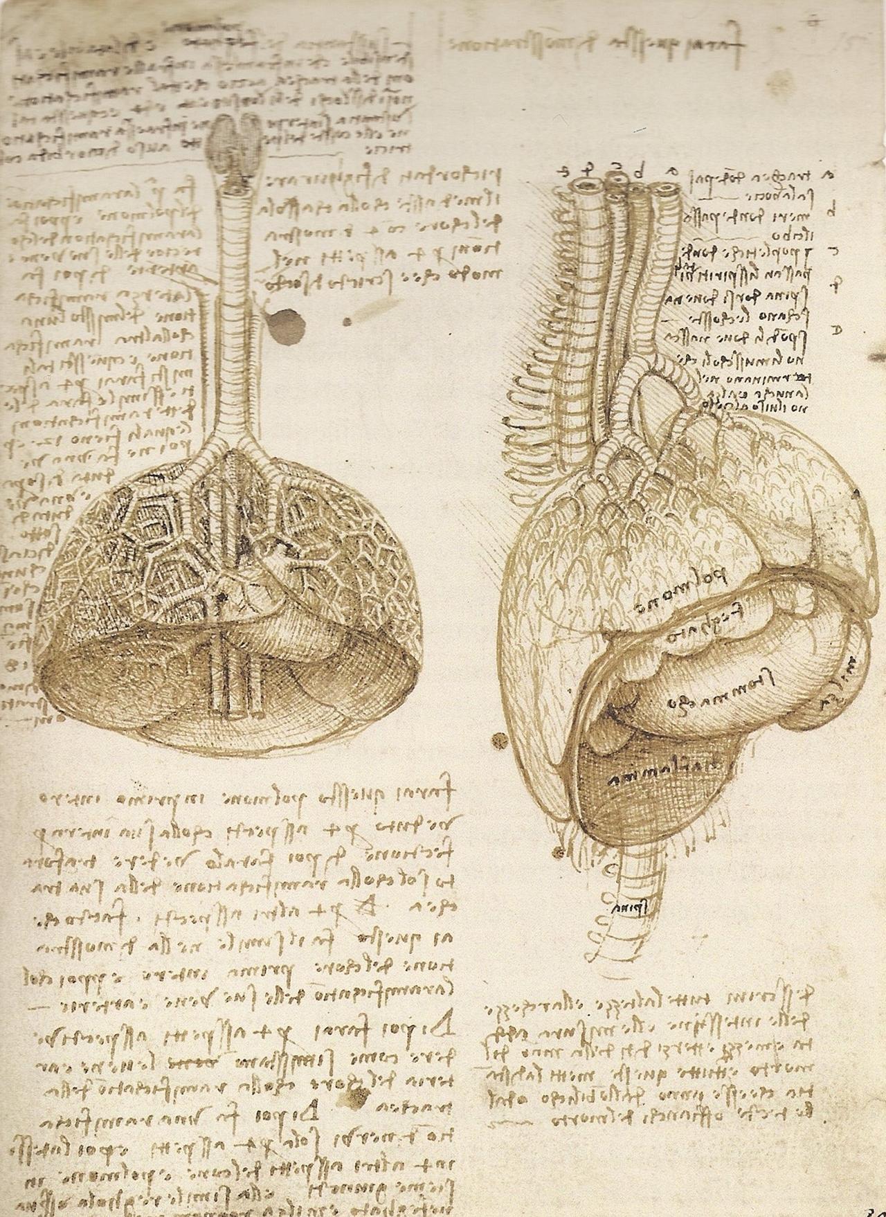 Leonardo da Vinci Anatomy References | 3DArt