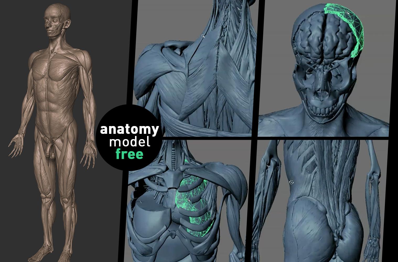 Human body 3d max download torrent
